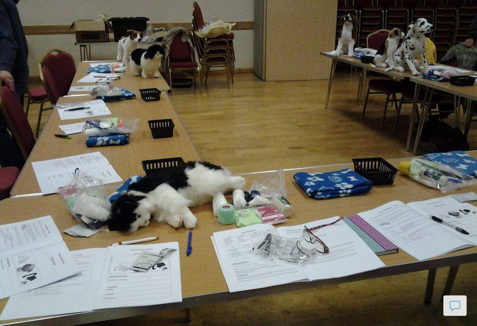 Northants dog-and-cat-first aid course